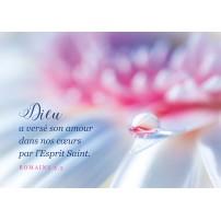Carte postale - Goutte d'eau sur un pétale de fleur