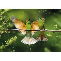 Carte postale - Oiseaux orange et verts sur une branche