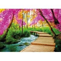 Carte postale - Chemin sur bois sous les arbres en fleur