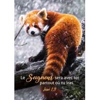 CARTE VB : Panda roux sur une branche