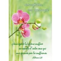 Carte VB - Orchidée rose
