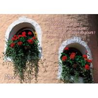 Carte VB - Géraniums rouges sur niche d'un mur