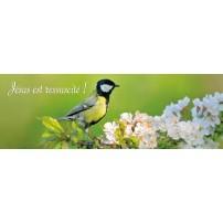 SIGNET : Oiseau sur branche d'arbre