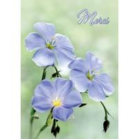 MINI CARTE : Trois fleurs bleues(Merci)