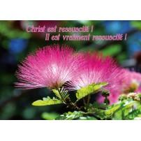 CARTE VB : Fleurs d'arbuste rose