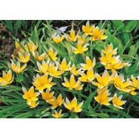 CARTE ST : Buisson de fleurs jaune