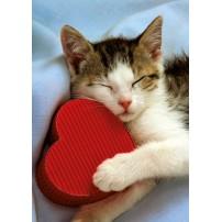 CARTE ST : Chat endormi sur coeur rouge