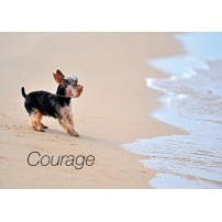 CARTE FLASH : Chien sur plage( Courage)