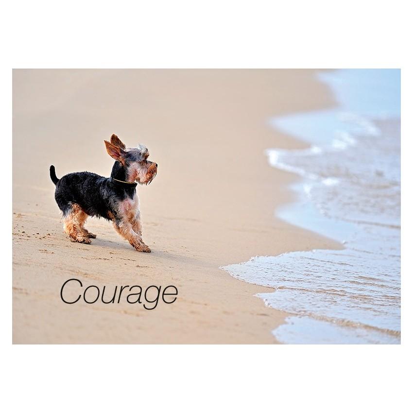carte avec message chien sur plage courage. Black Bedroom Furniture Sets. Home Design Ideas