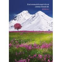 CARTE VB :  Champ de fleurs roses, montagne enneignée
