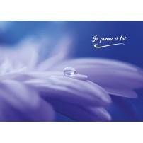 CARTE FLASH : Goutte d'eau sur une fleur blanche
