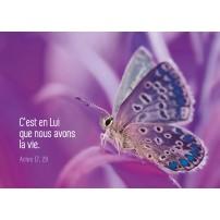 MINICARTE : Papillon sur fond violet