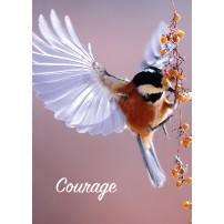 MINICARTE : Oiseau ailes déployées