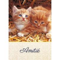 MINICARTE : Deux chatons dans la paille