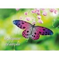 MINICARTE : Papillon rose et violet posé sur un fleur