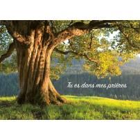 MINICARTE : Vieil arbre