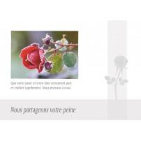 CARNET SC : Rose couverte de givre