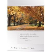CARNET SC : Allée bordée d'arbres en automne
