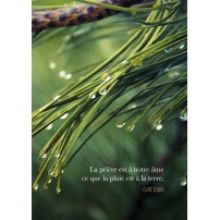 CARTE PENSEE : Gouttes d'eau sur épines de sapin