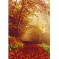 CARTE ST : Chemin dans la forêt en automne