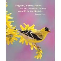POSTER : Oiseau et fleurs d'arbre jaunes
