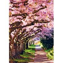 CARTE ST : Allée sous les arbres en fleurs
