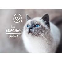 CARTE FLASH : Chat aux yeux bleus