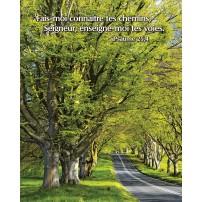 Poster Route sous les arbres