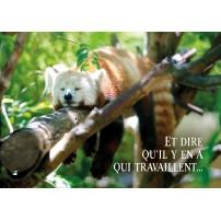 CARTE FLASH : Panda roux qui dort sur une branche