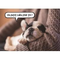 CARTE FLASH : Chiot endormi dans les bras de son maître