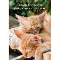Carte Citation Chatons roux faisant une sieste au soleil
