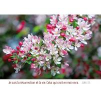 Carte Avec Verset Branche d'arbre en fleurs