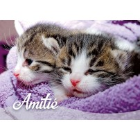 Mini Carte Deux chatons dans une couverture violette(Amitié)