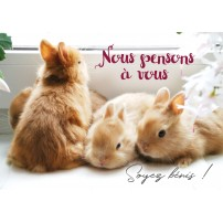 Carte Avec Message Trois lapins sur un rebord de fenêtre