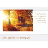 CARNET SC : Chemin dans la forêt en automne