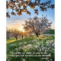 Poster Arbres en fleurs au printemps