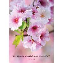Carte Avec Verset Fleurs d'arbre roses