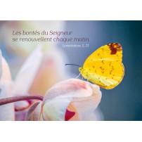 Carte Avec Verset Papillon jaune posé sur une fleur blanche