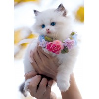 Carte Sans Texte Chat blanc avec un collier de fleurs