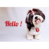 Carte Avec Message Petit chien avec un nœud sur la tête