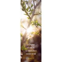 SIGNET : Soleil dans arbuste