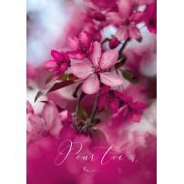 CARTE FLASH : Fleurs rose
