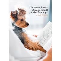 CARTE PENSEE : Chien faisant la lecture