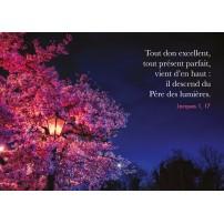 CARTE VB : Lampadaire dans arbre