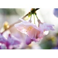 Carte Sans Texte Fleurs roses sur une branche