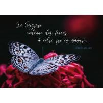 Carte Avec Verset Papillon blanc posé sur un bouquet de fleurs rouges