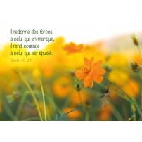 Carte Avec Verset Fleur orange dans un champ