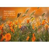 Carte Avec Verset Fleurs oranges dans les herbes hautes
