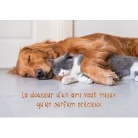 CARTE PENSEE : Un chien et un chat qui dorment ensemble